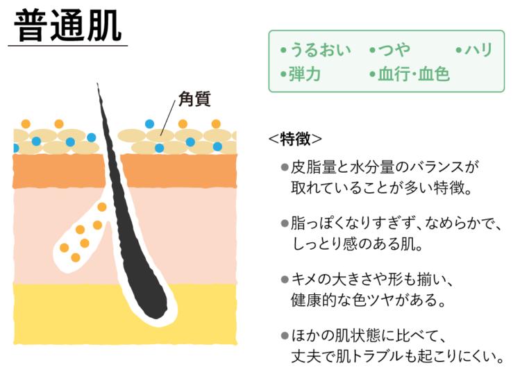 普通肌の特徴