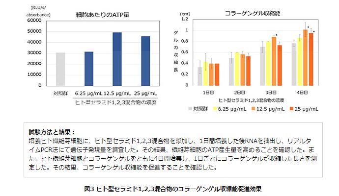ヒト型セラミド1,2,3混合物のコラーゲンゲル収縮能促進効果