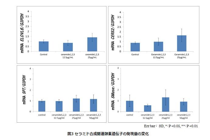 セラミド合成関連酵素遺伝子の発現量の変化