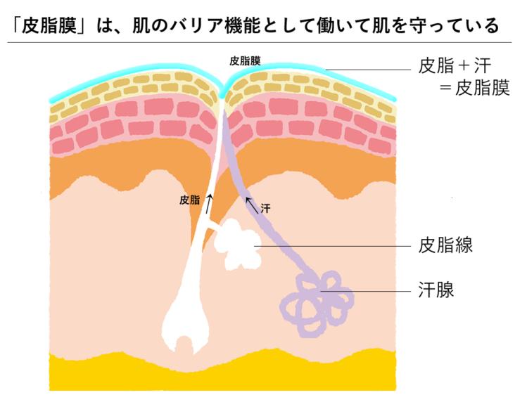 皮脂膜は、肌のバリア機能として肌を守っている