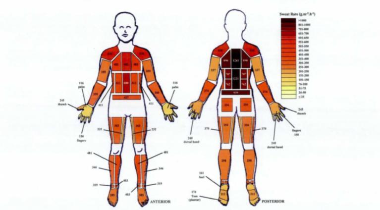 男性の部位による汗の分布図